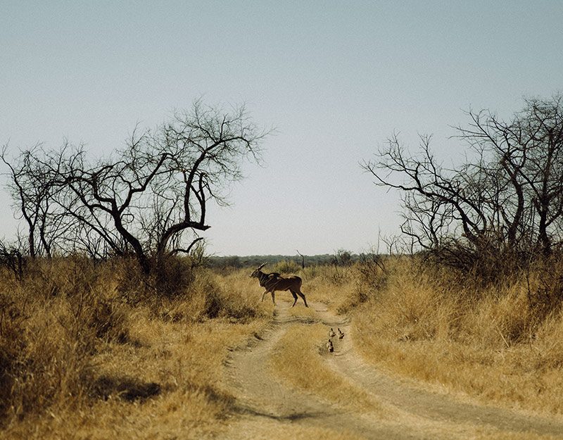 Dinokeng Game Reserve in Johannesburg, South Africa
